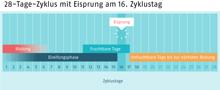 Infografik, die einen 28-Tage-Zyklus zeigt