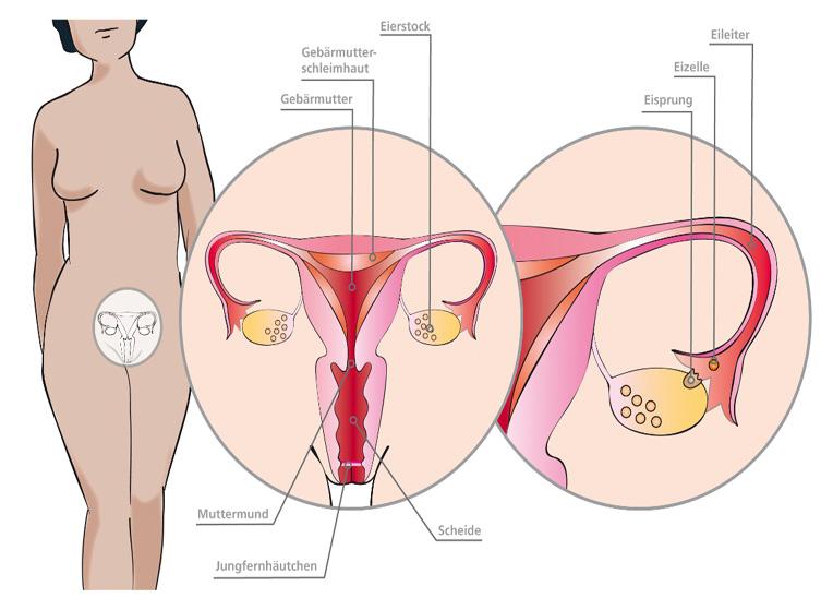weibliche vagina bilder nach der geburt